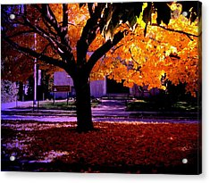 Fall Tree In Woodruff Place Acrylic Print by Martin Morehead