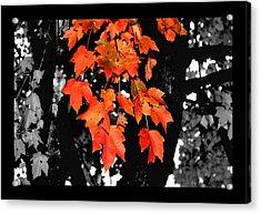 Fall Tree Acrylic Print by Karen Scovill