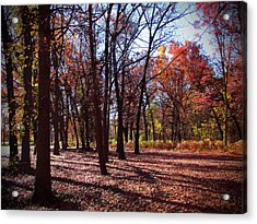 Fall Tree Shadows 2 Acrylic Print by Cedric Hampton