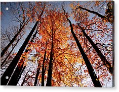 Fall Trees Sky Acrylic Print