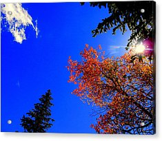 Acrylic Print featuring the photograph Fall Up by Karen Shackles