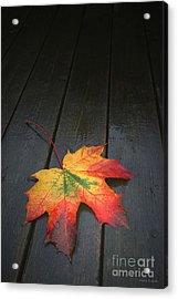 Fall Acrylic Print by Winston Rockwell