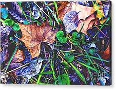 Fallen #3 Acrylic Print
