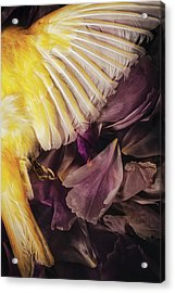 Acrylic Print featuring the photograph Fallen by Amy Weiss