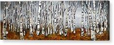 Fallen Acrylic Print by Chad Berglund