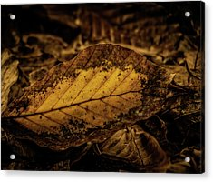 Acrylic Print featuring the photograph Fallen Color by Odd Jeppesen