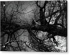 Fallen Dark Wood Forest Acrylic Print