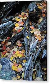 Acrylic Print featuring the photograph Fallen by David Chandler