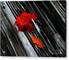 Fallen Acrylic Print by Elfriede Fulda