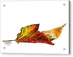 Fallen In Fall  Acrylic Print by Rahat Iram