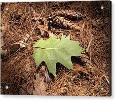 Fallen Leaf Acrylic Print by Karen Moulder