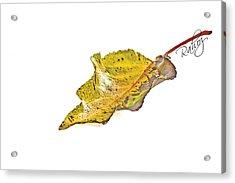 Fallen Leaf Acrylic Print by Rahat Iram