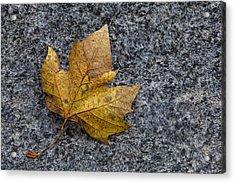 Fallen Leaf Acrylic Print by Robert Ullmann