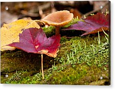 Fallen Leaves And Mushrooms Acrylic Print