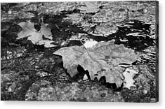 Fallen Leaves Acrylic Print by Andre Panatto