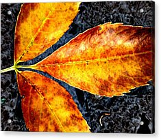 Fallen Leaves Acrylic Print by Beth Akerman