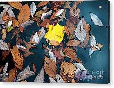 Fallen Leaves Acrylic Print by Hideaki Sakurai