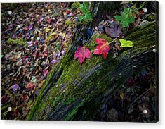 Acrylic Print featuring the photograph Fallen Leaves On The Limberlost Trail by Lori Coleman