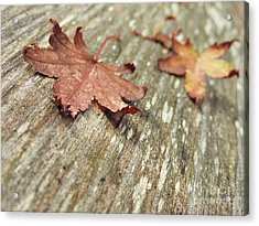 Acrylic Print featuring the photograph Fallen Leaves by Peggy Hughes