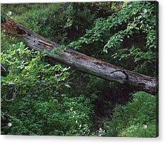 Fallen Log Acrylic Print by Michael L Kimble