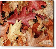 Acrylic Print featuring the photograph Fallen by Peggy Hughes