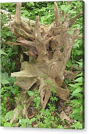 Acrylic Print featuring the photograph Fallen Tree by Beth Akerman
