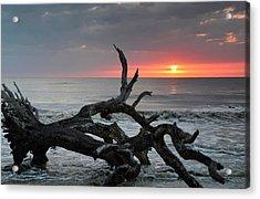 Fallen Tree In Ocean At Sunrise Acrylic Print by Bruce Gourley