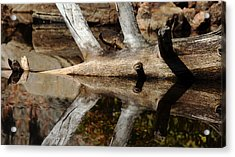 Acrylic Print featuring the photograph Fallen Tree Mirror Image by Debbie Oppermann
