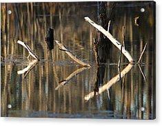 Fallen Trees Acrylic Print by Lori Mellen-Pagliaro