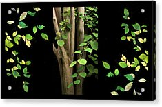 Falling For Spring Triptych Acrylic Print