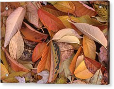 Falling Leaves On The Ground Acrylic Print by Lyle Crump