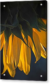 Falling Yellow  Acrylic Print