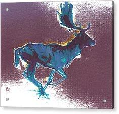 Fallow Buck Acrylic Print by Mark Adlington