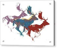 Fallow Bucks Acrylic Print by Mark Adlington