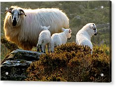 Acrylic Print featuring the photograph Family by Barbara Walsh