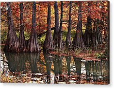Acrylic Print featuring the photograph Family Of Cypress At Lake Murray by Tamyra Ayles