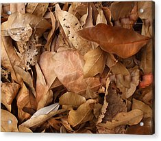 Family Of Leaves Acrylic Print by Janet  Telander
