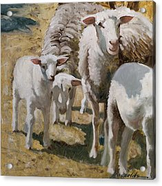 Family Of Sheep Acrylic Print by John Reynolds