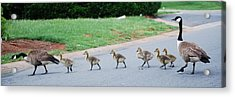 Family Outing Acrylic Print by Trudi Southerland
