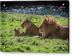 Family Pride Acrylic Print