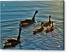 Family Swim Acrylic Print