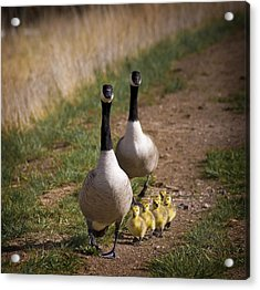 Family Time 2 Acrylic Print by Marilyn Hunt