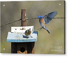 Family Time Acrylic Print by Mike Dawson