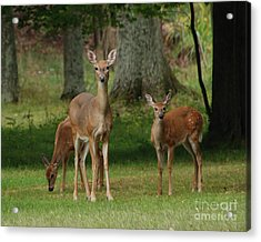 Family Walk Acrylic Print
