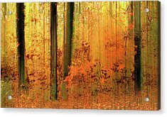 Acrylic Print featuring the photograph Fanciful Forest by Jessica Jenney