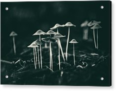 Fanciful Fungus Acrylic Print