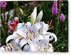 Fancy White Lily In Garden Acrylic Print