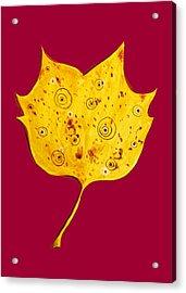 Fancy Yellow Autumn Leaf Acrylic Print