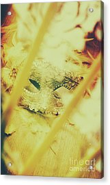 Fanning The Drama Acrylic Print by Jorgo Photography - Wall Art Gallery