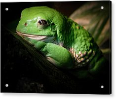 Acrylic Print featuring the photograph Fantastic Green Frog by Jean Noren